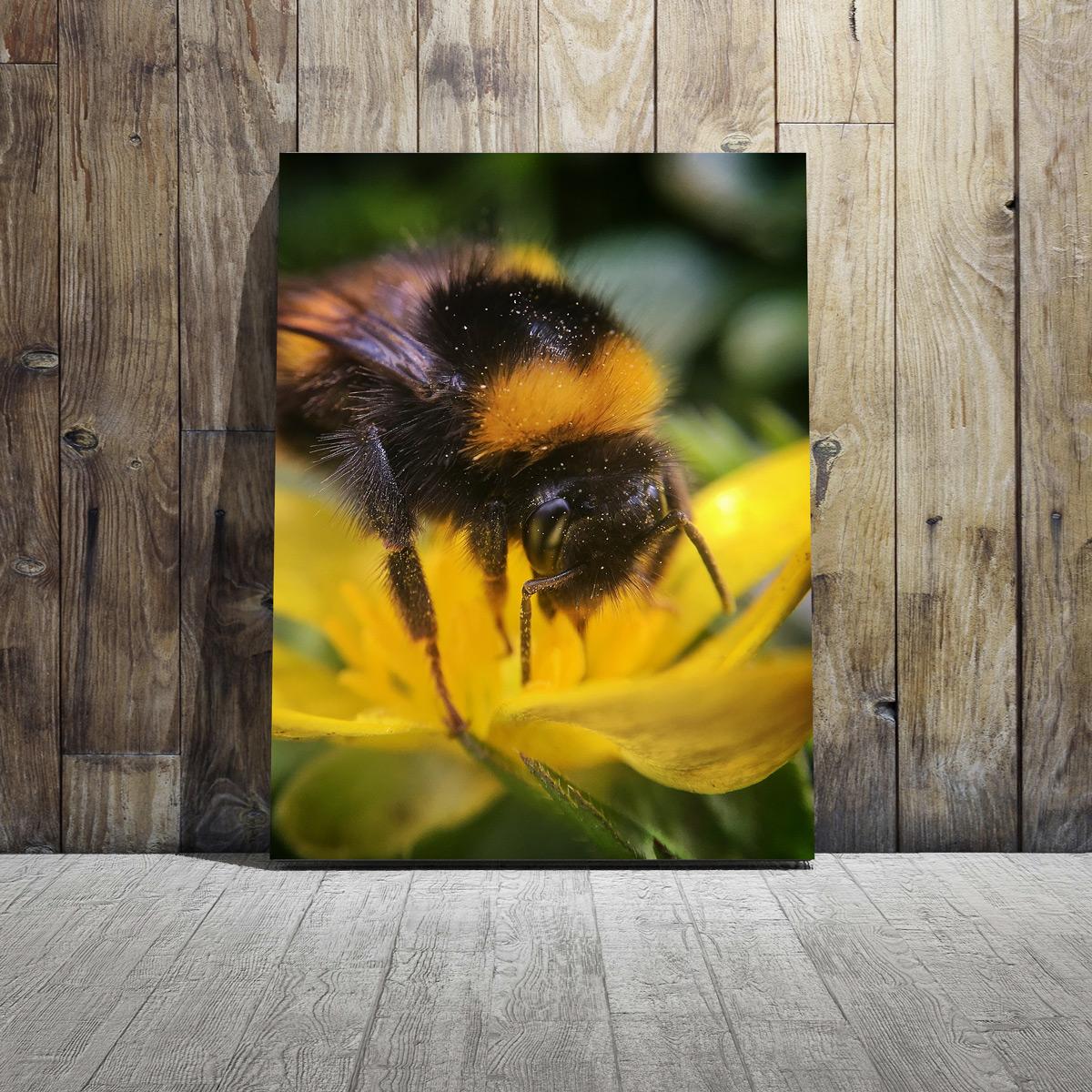 Home Decor Ideas - Beeautiful - Canvas Print   Jon Mace Photography